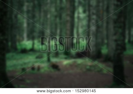 Nature green forest with moss blurred background