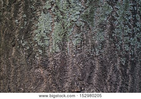 Close up of a wooden wall. Wooden Walls