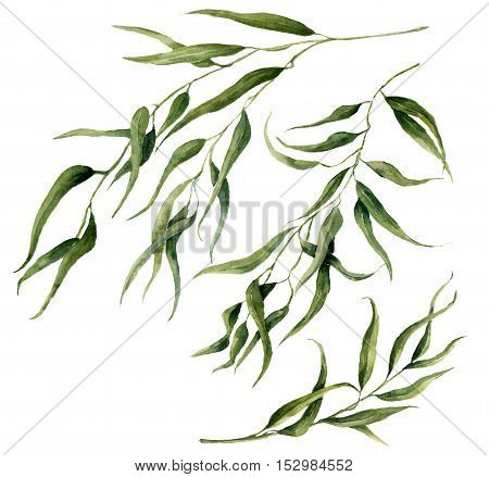 Watercolor eucalyptus leaves branch set. Hand painted floral elements. Illustration on white background. For design, textile and background