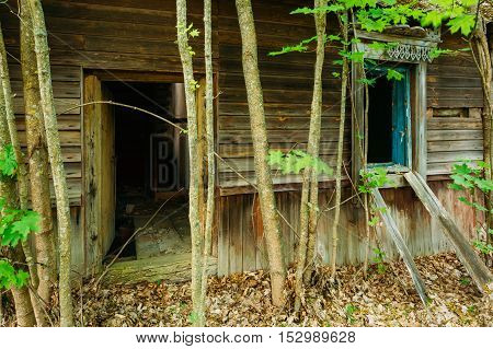 Exclusion Area After Chernobyl Tragedy, Nuclear Contamination. Close The Entrance To Dilapidated Old Wooden Country House With Ruined Floor And Window, Overgrown By Trees In Summer.