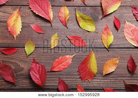 Autumn Leafs On Brown Wooden Table