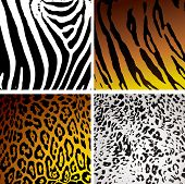 stock photo of jungle animal  - Animal skin backgrounds with different camouflage textures and patterns - JPG