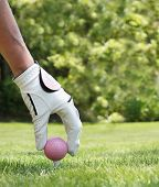 stock photo of ladies golf  - Ladies hand placing a pink golf ball on a tee - JPG