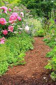 stock photo of english cottage garden  - Pretty path in an english cottage garden - JPG