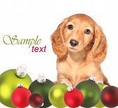 image of puppy christmas  - Dachshund puppy surrounded by Christmas ornaments - JPG