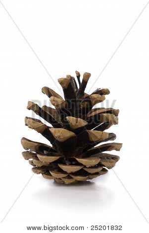Pine Cone On White Background
