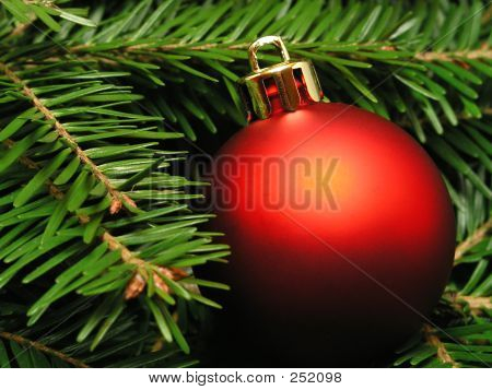 Christmas Tree – Close-up