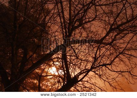 Tree Silouette Foggy Night