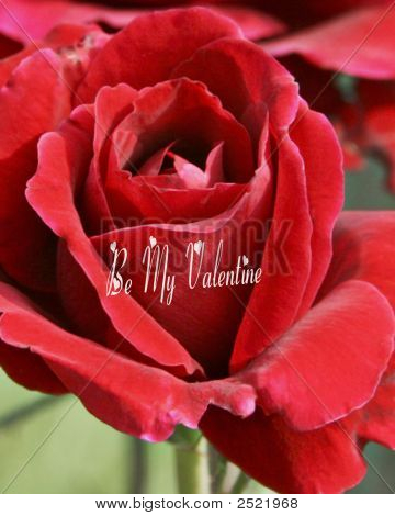 Be My Valentine On Red Rose