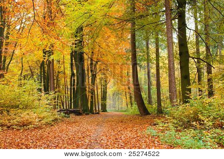 Footpath through a beautiful autumn forest