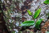 Natural Background Green From Nature Background  Natural Branches. Green Leaf After The Rain Beautif poster