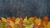 Autumn Metallic Gold Copper Leaf Frame. Different Fall Metallic Paint Leaves On Dark Natural Backgro poster