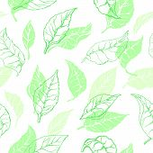 Vector Nature Seamless Pattern Of Tea Leaves Organic Drink, Vegan Food, Green Wallpaper Herb Shape,  poster