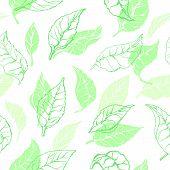 Vector Nature Seamless Pattern Of Tea Leaves Organic Drink, Vegan Food, Green Wallpaper Herb Shape,  poster
