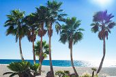Palm Trees On Sandy Coastal Beach Of Mediterranean City poster