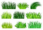 Flat Vector Set Of Different Decorative Grass Borders. Bright Green Wild Herb. Nature And Botany The poster