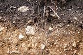 Layers Of Soil Wet Soil Roots In Soil Soil Profile Soil Zones Rocks In Soil poster