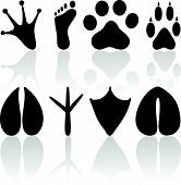 pic of animal footprint  - Vector human and animal footprints on a white background - JPG