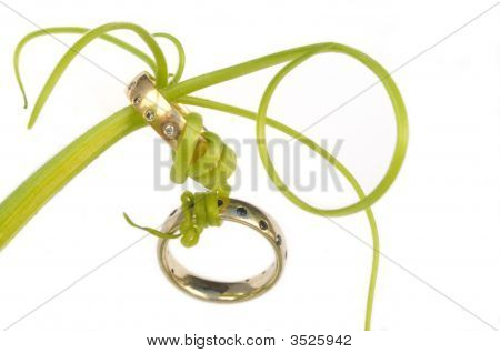 Wedding Rings Connected With Vines