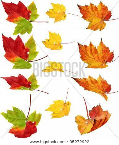 Autunm Falling Leaves