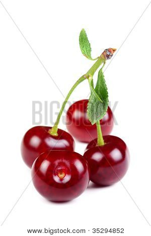 Group Of Sweet Fresh Cherries With Green Leaves