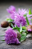 picture of scottish thistle  - Scottish thistle flower on old  wooden table - JPG