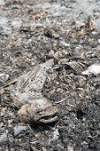 Dead Fish On Dry Wetland