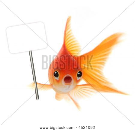 Shocked Goldfish Isolated On White Background