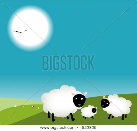 Mum And Dad Sheep