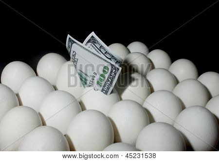 Dollar Bill on Eggs