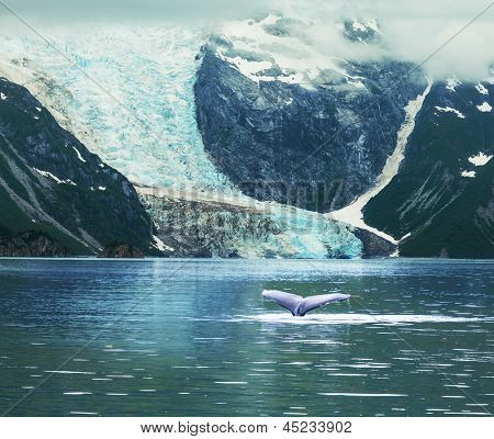 Humpaback Whale in  Alaska