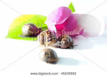 Snails On Pink Flower