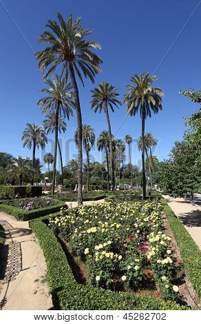 Palm Trees And Flowers In Seville