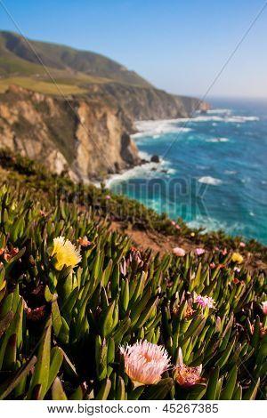Wildflower Blooming along the Beautiful Coastline in Big Sur,California