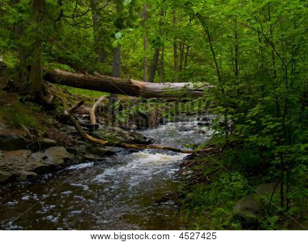 Forest Brook Under Fallen Tree