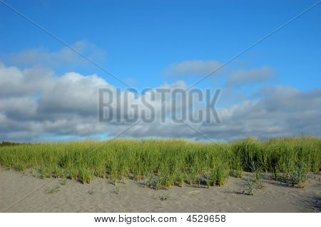 Sand Dunes At Long Beach Peninsula