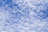 Постер, плакат: Высоко кучевые облака