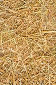 pic of dry grass  - Close up rice straw background texture in farm - JPG