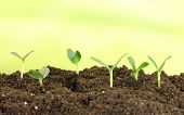 foto of land development  - Green seedling growing from soil on bright background - JPG