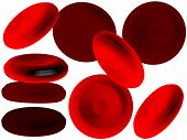 pic of red blood cells  - red blood cells which are also most important for life - JPG