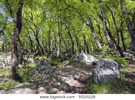Rocks In The Forrest