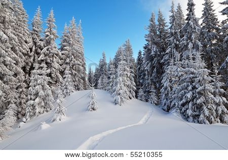 Winter landscape with forest trail in the snow. Frosty day in a mountain valley. Carpathian mountains, Ukraine, Europe