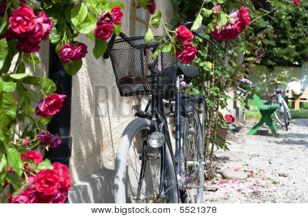 Bicycle And Roses In Sweden
