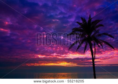 sunset sunrise palm tree over Mediterranean sea
