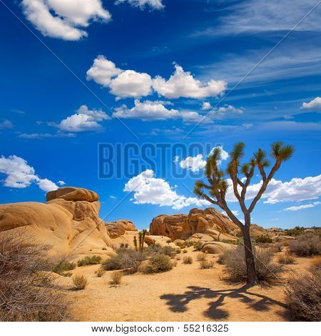 Joshua Tree National Park Jumbo Rocks in Yucca valley Mohave Desert California USA