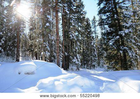 Snow Season...