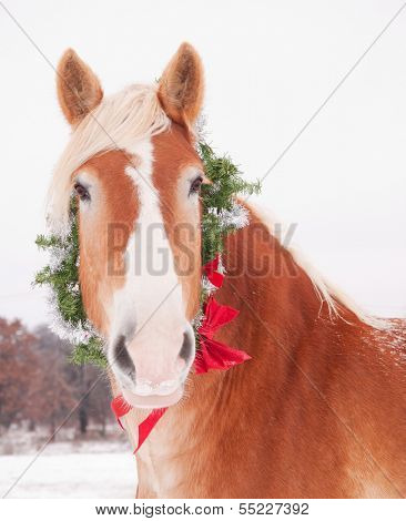 Blond Belgian draft horse wearing a Christmas wreath