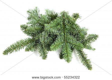 Bare Green Plucked Christmas Twigs Over White Background