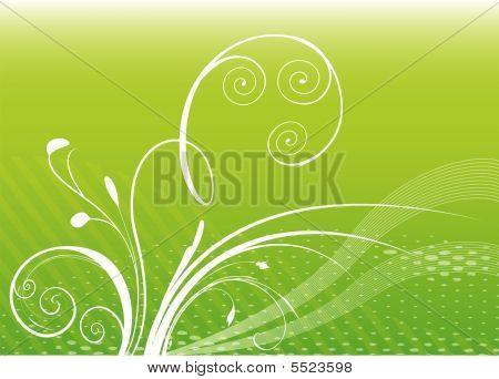 Ornate Plant