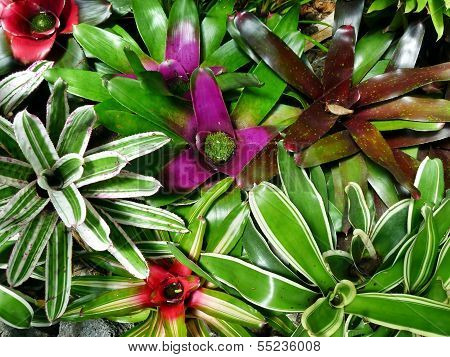Entangled Bromeliads